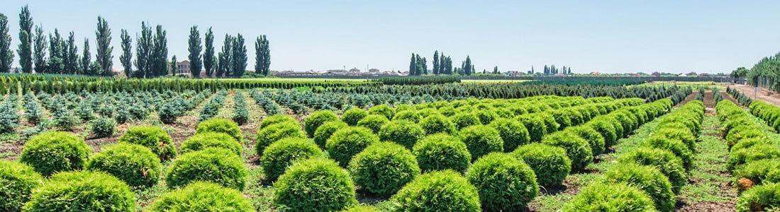 Пример создания лендинга по поставкам растений из Европы