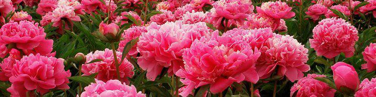 Кейс по SEO-продвижению в тематике «Доставка цветов»