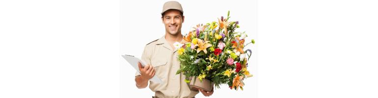 Продвижение сайта доставки цветов, рост трафика на 100% за 3 месяца